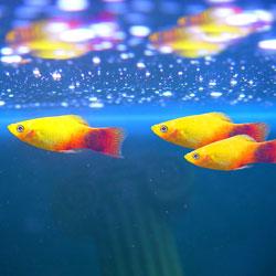 Pisces2web