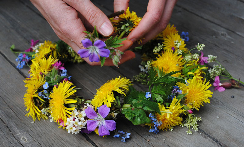 flower-1467550_1920w800